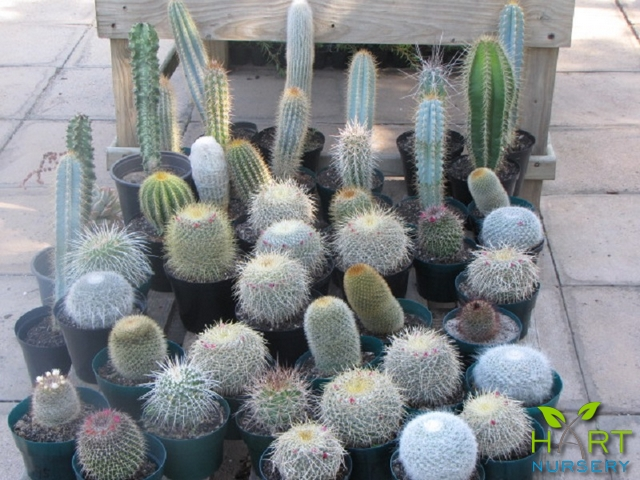 succulents-and-cactus
