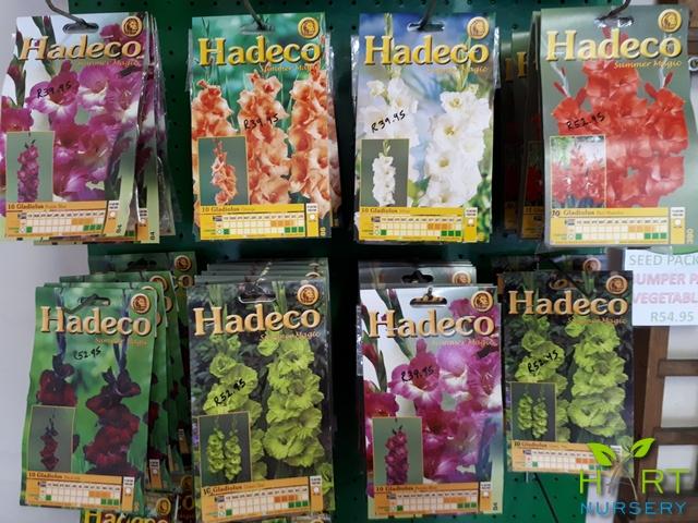 hadeco-bulbs